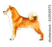 shiba inu dog painted with... | Shutterstock . vector #313920572