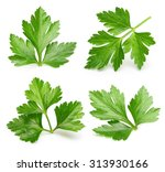 parsley herb isolated on white... | Shutterstock . vector #313930166