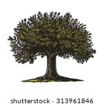 Engraved Tree.  Vector...