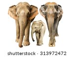 family elephant on isolated. | Shutterstock . vector #313972472