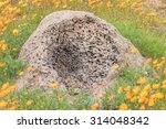 An Anthill Raided By An Ant...