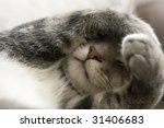 Bashful Gray Cat With Paws Ove...