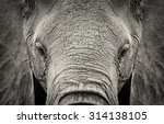 Close Up Of African Elephant ...