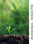 young plant | Shutterstock . vector #314221742