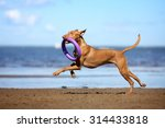 Stock photo active beautiful dog running on the beach 314433818