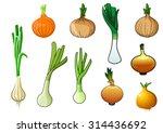 golden onion bulbs with...