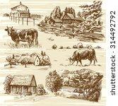 farm  cows  rural landscape  ...   Shutterstock .eps vector #314492792