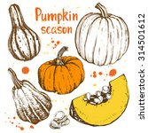 pumpkin season. different... | Shutterstock .eps vector #314501612