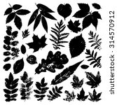 Collection Black Leaves...