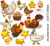 Chicken And Fresh Eggs...
