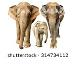 family elephant on isolated. | Shutterstock . vector #314734112
