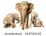 family elephant on isolated. | Shutterstock . vector #314734142