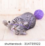 Stock photo cat playing with a ball color purple on wood background 314735522