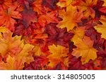 Red and Orange Autumn Leaves Background
