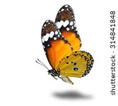 Stock photo the beautiful flying plain tiger butterfly danaus chrysippus or so called african monarch flying 314841848