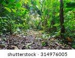 Jungle Footpath Through Lush...