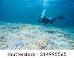 scuba diver with a camera swims ... | Shutterstock . vector #314995565