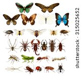 wild insects in various types... | Shutterstock .eps vector #315025652