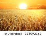backdrop of ripening ears of... | Shutterstock . vector #315092162