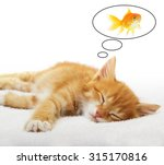 Stock photo ginger little kitten sleeping 315170816