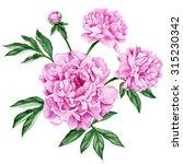 garden peony bouquet.... | Shutterstock . vector #315230342