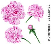 Set Of Watercolor Peony Flowers