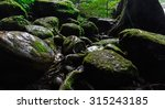 Moss On Rock In Forest In...