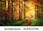 autumn forest scenery with rays ...