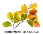 Twigs With Colorful Leaves Of ...