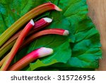 Freshly Cut Bright Rhubarb On...