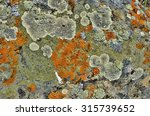 Lichens Are Symbiotic Fungi An...