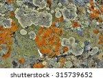 Lichens Are Symbiotic Fungi An...
