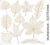 skeleton autumn leaves of...