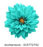 turquoise flower dahlia macro... | Shutterstock . vector #315772742