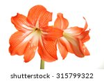 Big Red Flowers Isolated On...