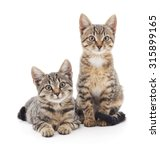 Two Kittens Isolated On A White ...
