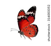 beautiful red butterfly lower... | Shutterstock . vector #316003352