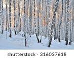 Winter Sunset In The Birchwood...