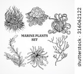collection of marine plants ... | Shutterstock .eps vector #316062122