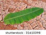 Arid Lands Of Banana Leaf