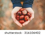 Autumn Time. Handful Of Conker...
