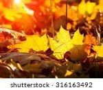 big autumn oak and grass on a... | Shutterstock . vector #316163492
