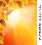autumn frame background with... | Shutterstock .eps vector #316197182