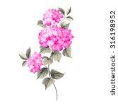 purple flower hydrangea on... | Shutterstock .eps vector #316198952