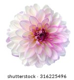 Light Colorful Dahlia Flower...