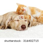 Stock photo kitten and puppy sleeping 316402715