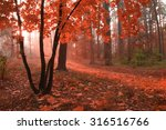 Misty Autumn Forest With Red...