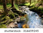 the primeval forest with mossed ... | Shutterstock . vector #316659245