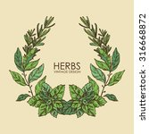 wreath  from herbs  hand drawn  | Shutterstock .eps vector #316668872
