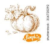 hand drawn sketch of pumpkin... | Shutterstock .eps vector #316720292